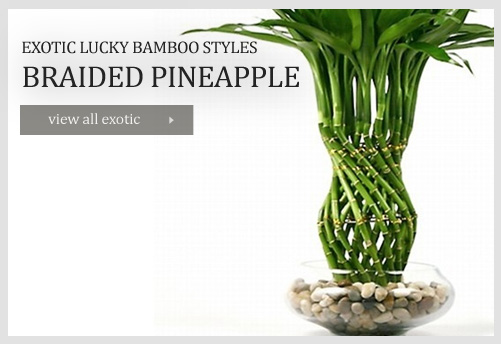 Has it that the number of lucky bamboo stalks have different meanings