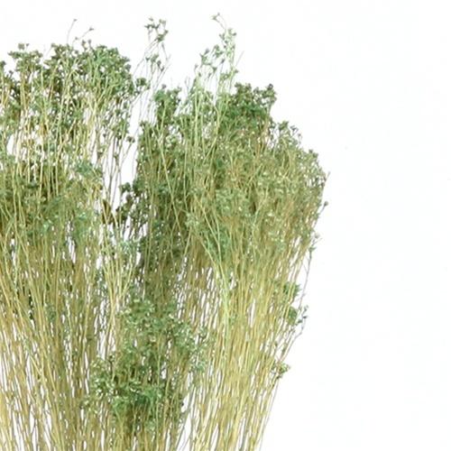 Broom Bloom From Easternleaf Com Broom Bloom Comprises Of