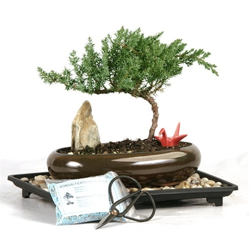 Oval Juniper Crane Gift Set