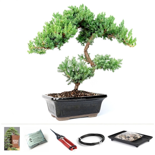 trained juniper bonsai rh easternleaf com Bonsai Copper Wire bonsai tree wire kit