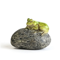 Sleeping Frog on Stone