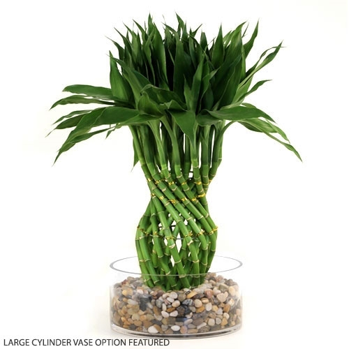 Lucky Bamboo Arrangement Pineapple Braided Lucky Bamboo