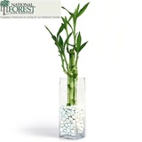 Fortune 5 Lucky Bamboo Arrangement
