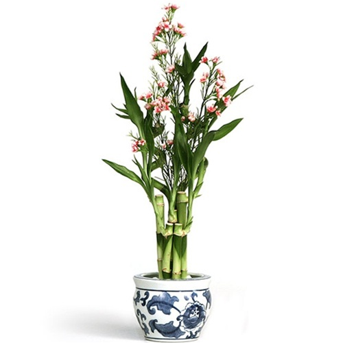 lucky bamboo arrangement silk flower accents. Black Bedroom Furniture Sets. Home Design Ideas