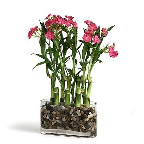 Lucky Bamboo Arrangement Silk Flower Accents
