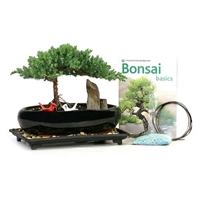 """Pair of Cranes"" Set with 10"" Juniper Bonsai"