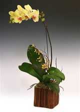 Orchid Arrangement - Yellow