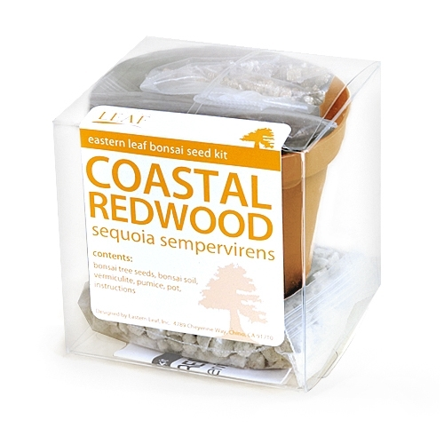 Coastal Redwood Bonsai Seed Kit