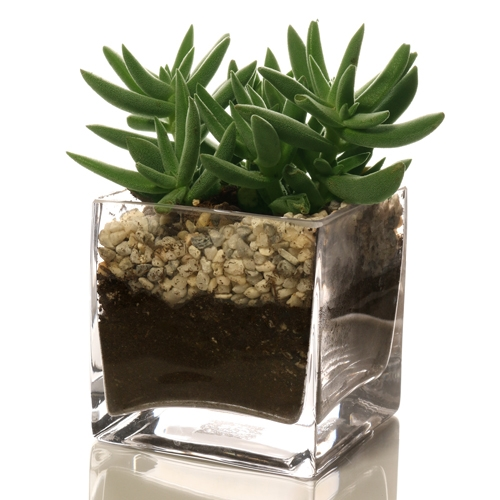 Desk Square Glass Terrarium Kit