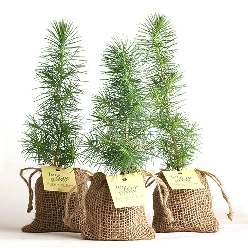 Pine Tree Plant Favor Burlap Pouch At Easternleaf Com