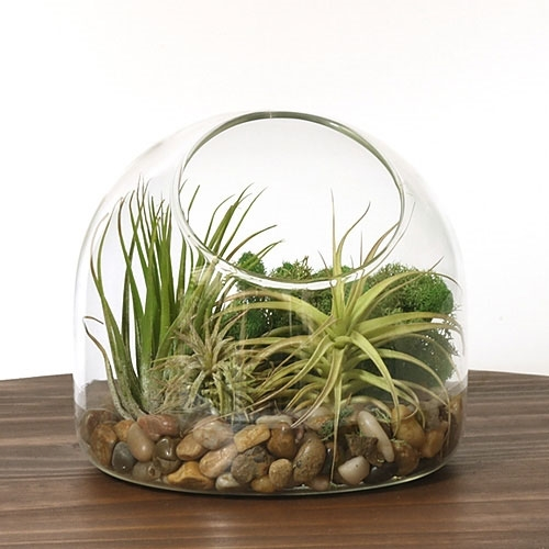 desk air plant terrarium kit. Black Bedroom Furniture Sets. Home Design Ideas