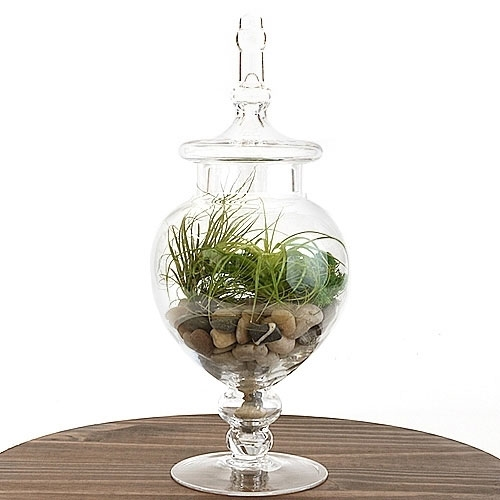 Apothecary Jar Air Plant Terrarium Kit