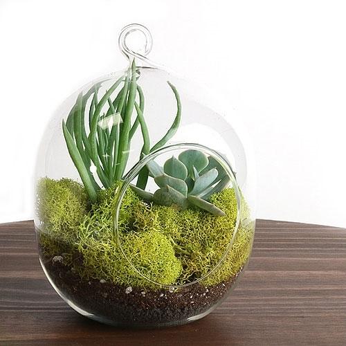 Small Centerpiece Kits : Hanging succulent terrarium kit