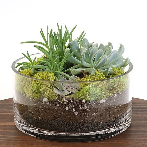 Succulent Dish Terrarium Kit