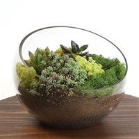 Large Bowl Succulent Kit