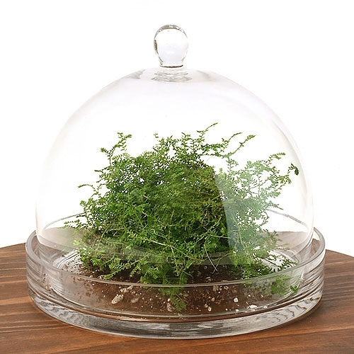 Large Cloche Terrarium Kit