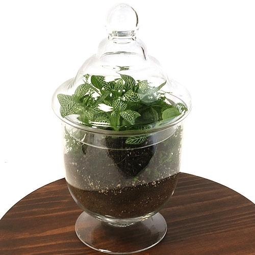 apothecary jar terrarium kit. Black Bedroom Furniture Sets. Home Design Ideas