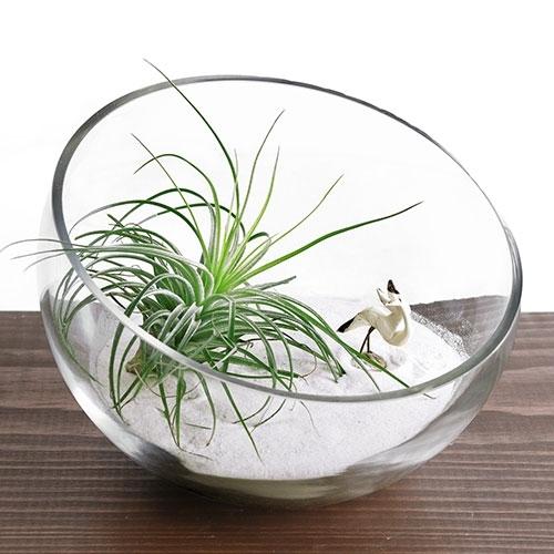 zen garden terrarium bowl kit. Black Bedroom Furniture Sets. Home Design Ideas