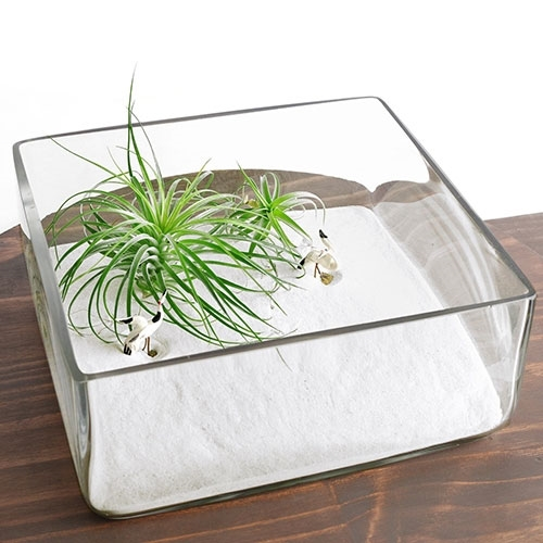 Zen Garden Terrarium Kit Square Dish
