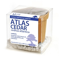 Atlas Cedar Bonsai Seed Kit