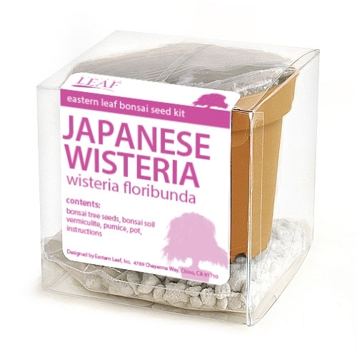 Japanese Wisteria Bonsai Seed Kit
