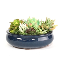 Medium Blue Oval Succulent Arrangement