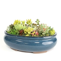 Large Blue Oval Succulent Arrangement