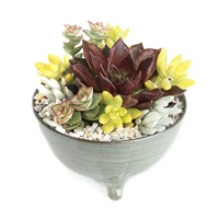 Willow Bowl Succulent Arrangement