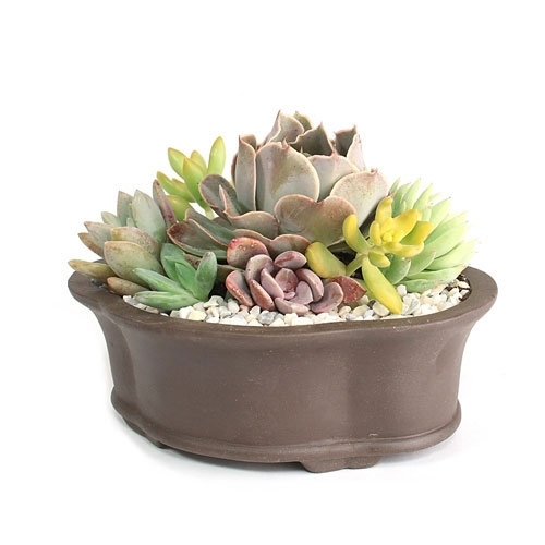 Lotus Pot Succulent Arrangement