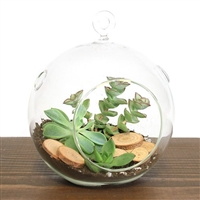 Hanging Succulent Wood Terrarium Kit