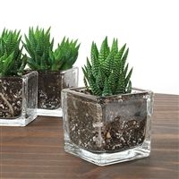 Haworthia Aloe Glass Favor