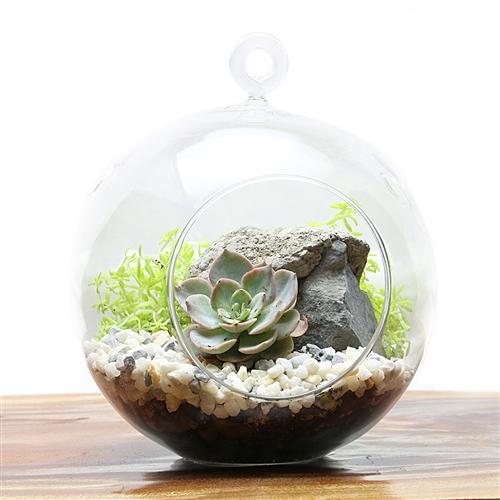 hanging succulent terrarium kit. Black Bedroom Furniture Sets. Home Design Ideas
