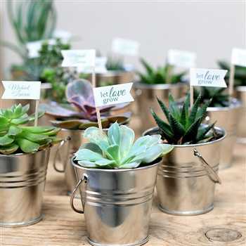 Succulent Tin Favor