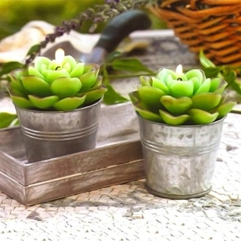 Succulent Candles Green Aloe