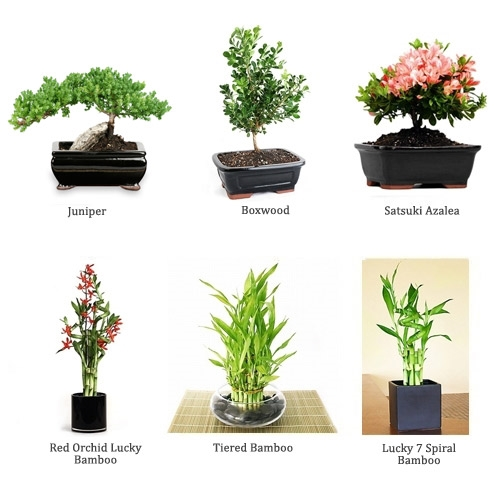6 month plant subscription each month the recipient will for Different kinds of bonsai trees