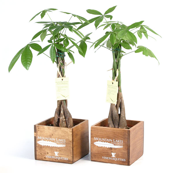Bonsai Bonsai Trees Zen Gardening Plants And Supplies Eastern Leaf