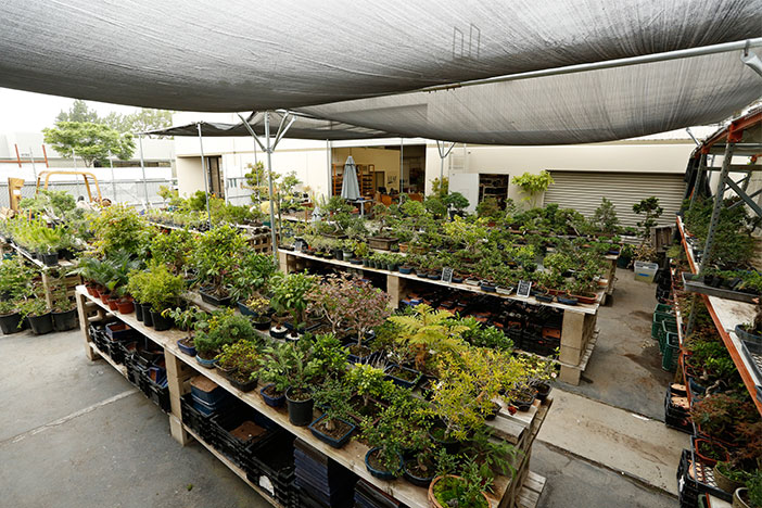 Eastern Leaf Bonsai Nursery