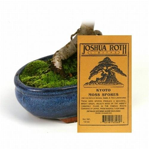 Kyoto Moss Spores Bonsai