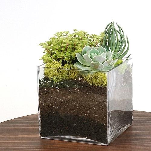 Square Gl Terrarium Vase