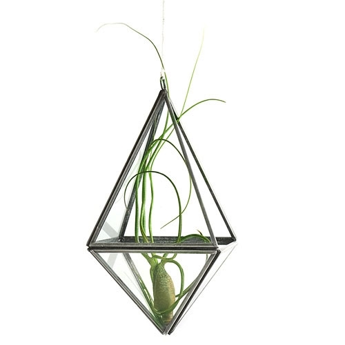 Zinc Diamond Terrarium