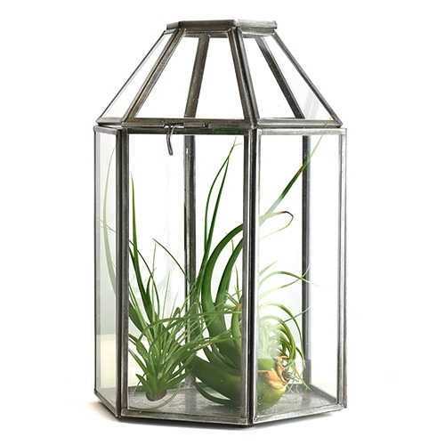 Zinc Lantern Terrarium Tall