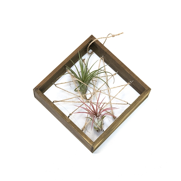 Cat's Cradle Air Plant Frame