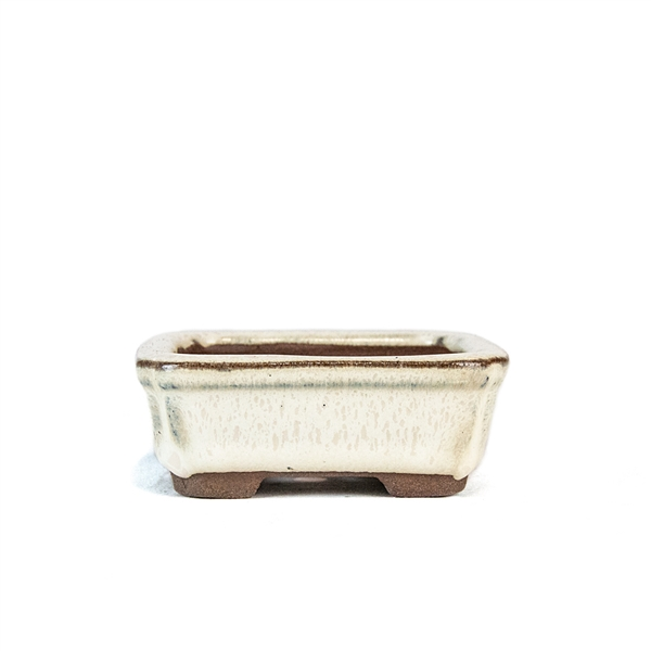"3"" Beige Rectangle Mame Pot"