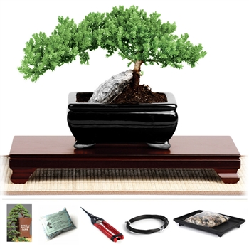 Bonsai Tree Gift Sets Bonsai Starter Kits And Bonsai Monthly Subscriptions