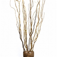 Botanicals - Curly Willow