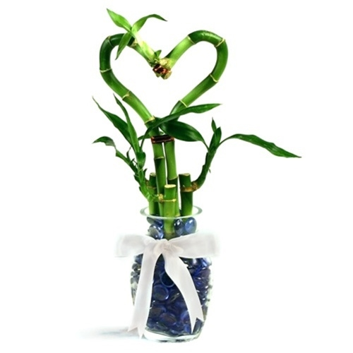 Romantic Heart Bamboo