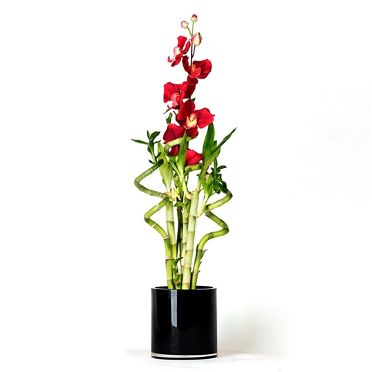 Lucky Bamboo Arrangement - Red Orchid Lucky Bamboo