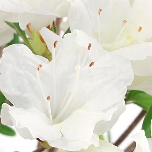 Flowering azalea bonsai tree satsuki azalea white blossom mightylinksfo