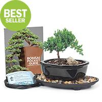 Bonsai Tree Starter Kits