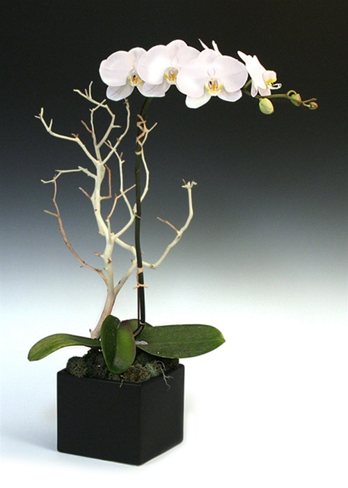 Ideal Orchid Arrangements, Orchids, Send Orchids - Eastern Leaf JL82